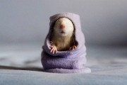 крысята Джессики Флоренс