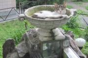 коты Питерских дворов