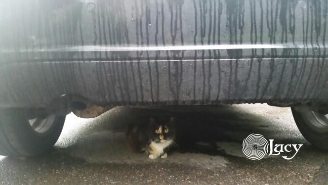 Кот дождя