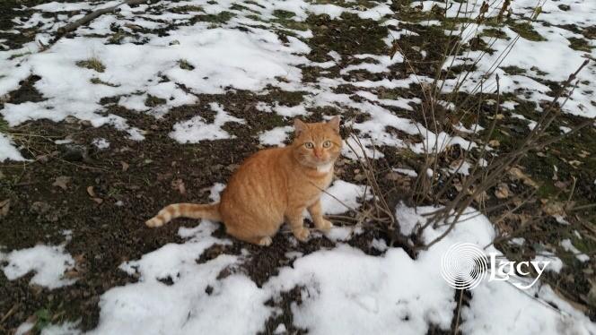 Кот зимний