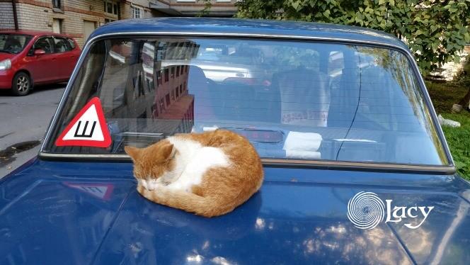 Шшш...не будите кота!
